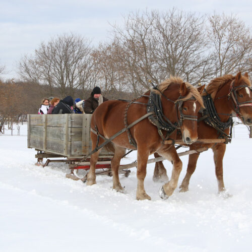People Riding On A Sleigh