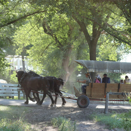 Two Horses Pulling A Wagon