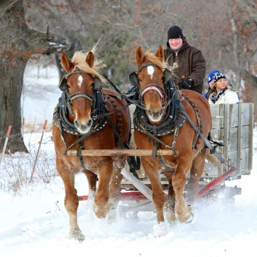 Two Horses Pulling A Sleigh Through The Snow